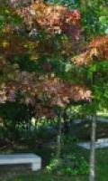 Arboretum du bois de l'étoile - Journées du Patrimoine 2017