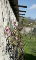 Les murs à pêches le bois Gobetue - Journées du Patrimoine 2017
