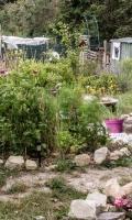Jardins partagés - Journées du Patrimoine 2017
