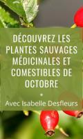 Sortie Plantes sauvages médicinales et comestibles